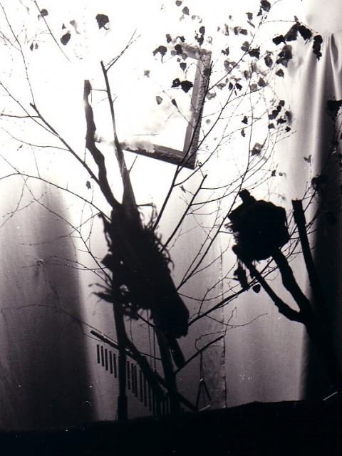 forêt des sortilèges_027