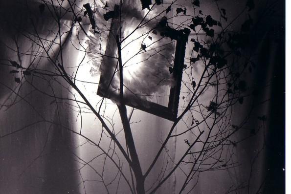 forêt des sortilèges_028